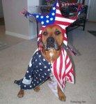 patriotic-dog